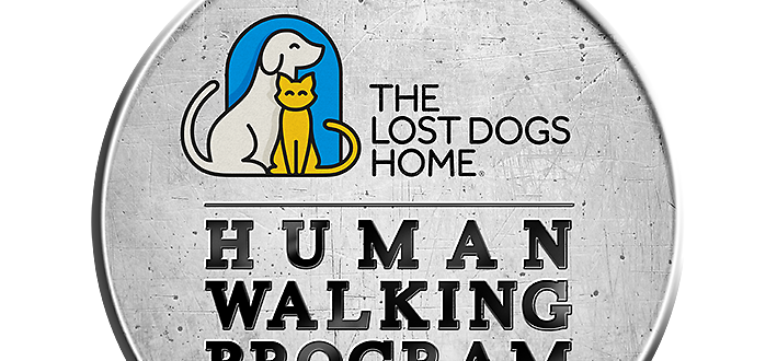 the-lost-dogs-home